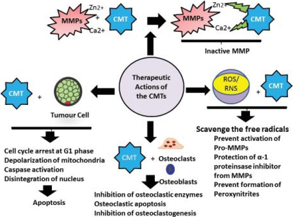 Chemically modified tetracyclines: Novel therapeutic agents in the