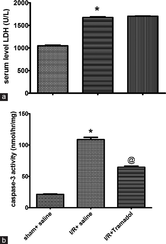 Figure 2: (a and b) Effect of tramadol injection (50 mg/kg, i.p., single dose) on serum lactate dehydrogenase activity and hepatic caspase-3 activity in rats subjected to ischemia/reperfusion, (<i>n</i> = 6), *<i>P</i> < 0.05 (significantly different from Sham group); <sup>@</sup><i>P</i> < 0.05 (significantly different from ischemia/reperfusion group)