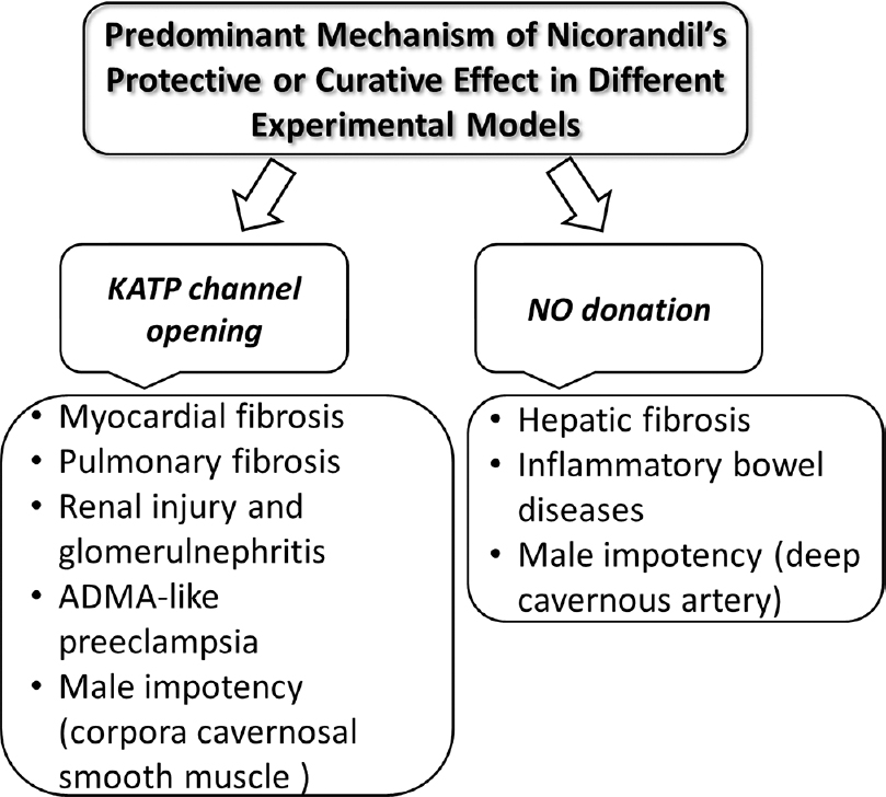Figure 1: Predominant mechanism of action of nicorandil in different experimental models